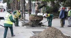 Ялта принимает подарки – новые пальмы на набережной