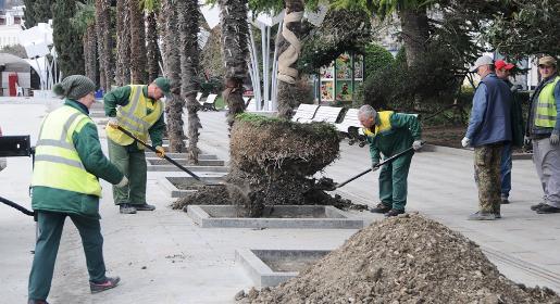 Новые пальмы в Ялте